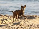 IT'S the photo that Save the Fraser Island Dingoes advocate Karin Kilpatrick believes the Fraser Coast public should see.