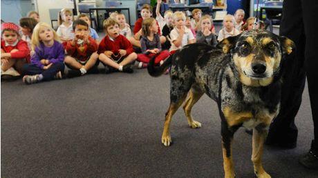 Σκύλοι φύλακες σε σχολεία...
