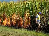 THE January floods took a toll on the Tweed's sugar cane industry but cane farmers are working hard to get past the devastation.