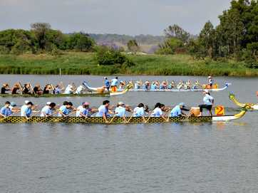 11th Annual Grafton Jacaranda Dragon Boat Regatta on the Clarence River.