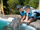 Filming of ABC 3 documentary series Blue Zoo continues at Coffs Harbour's Dolphin Marine Magic.