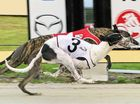 THIS evening's Grafton Greyhound race meeting will be highlighted by two heats of the Taragreyhounds.com.au stakes over 480m.