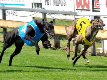 A selection of photos taken of the greyhound action at Thabeban Park.