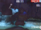 Tourist footage of tiger attack at Australia Zoo