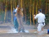 A TOOWOOMBA teen has described the wild scenes at Australia Zoo on Tuesday when a tiger attacked trainer Dave Styles.