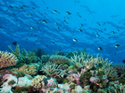 THE Australian Marine Conservation Society (AMCS) is preparing to launch a community survey to gauge what residents identify as threats to the reef.