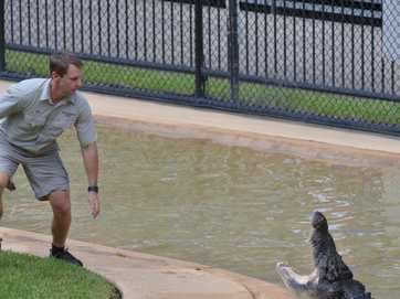 Robert Irwin celebrates his 10th birthday by feeding the saltwater crocs at Australia Zoo.