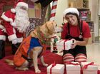 Get your gifts wrapped to donate to Guide Dogs