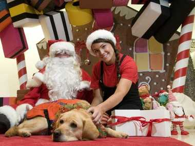 Santa Claus and his elf Jehsika Peacock with guide dog in-training Ivy rally support for the Myer gift wrapping service.