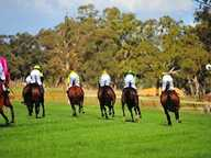 Held at the Avoca Racecourse, this country race meeting celebrates Anzac Day with a favourite Aussie pastime - horse racing!   Kick back and relax with...