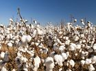 THE cotton market surprised most traders Tuesday with a sharp rally and, despite not being able to hold all the gains, prices managed to settle higher.
