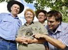 IPSWICH'S koala population will soon enjoy a new source of food and housing, with a conservation initiative which will plant 11,500 habitat trees.