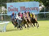 RUN HOME: Horses and jockeys at the Mackay races on Tuesday, Craiglea Falcon, which ran second, is in the white and blue.
