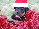 Our furry friends are spreading the Christmas cheer