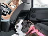 EXPERTS have warned pet owners that they are dicing with their safety when they take their best friends on the road with them.