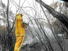 WIRES Northern Rivers is preparing for an influx of emergency calls over the next few days during the bushfire clean-up along The Coast Road.