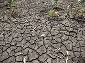 QUEENSLAND is now officially in the midst of its worst drought in history with almost 80 per cent of the state drought declared.