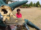 BALLANDEAN residents are hopeful Fruitisforus, the township's iconic dinosaur statue, can be repaired after a car smashed into the statue late on Tuesday night.