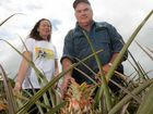 EUROPEANS are sweet on Bungundarra pineapple farmer Barry Brooks' plants. But it's not the tasty fruit they're hankering after - it's the enzyme bromelain.