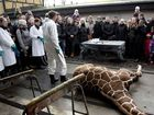 COPENHAGEN Zoo has gone ahead with its plan to kill a giraffe and feed it to lions in front of onlookers, despite a $680,000 offer to back away from the idea.