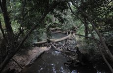 The  Coochin Creek in the Glasshouse Mountains where police and SES searched for the remains of Daniel Morcombe.