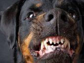 FOURTEEN savage dog attacks in Noosa Shire in the past two weeks have council ready to crack down on lax owners.