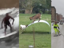 Viral videos of the week - February 18, 2014