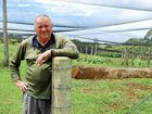 IN THE past year Ray Hick, owner of Bangalow's Heavenly Valley farm, has gone from stonefruit grower and industry leader to cattle farmer.
