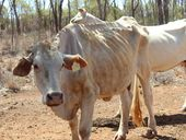 ON FRIDAY, 79% of Queensland was formally drought-stricken, the largest area ever recorded.