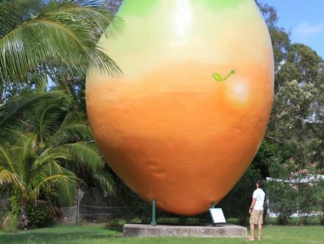 The Big Mango became national news after going 'missing'.