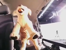 Dogs fail 'dummy' crash test