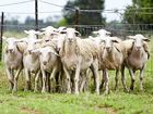 SHEEP producers and industry participants should pencil July 9 into their diaries.