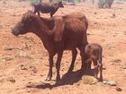 FOR some drought-affected graziers, the situation is deteriorating by the day.
