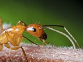 ANTS find your home attractive for the same reason you do: it is dry, with a plentiful supply of food and moisture.