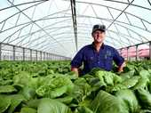 GROWING TREND: Graham Grant from Wardell Hydroponic Lettuce at their East Wardell farm.