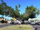 BUNDABERG Landcare has lashed out against the regional council after plans were put in the pipeline to remove fig trees from a median strip on Bourbong St.