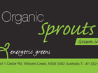 Mullum's Energetic Greens has recalled its Organic Sprouts Salad sold in local greengrocers and IGA stores in NSW, as well as Glorious Organic Farmers Markets.