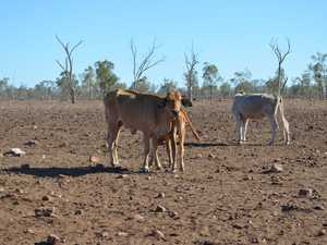 Around 80% of Queensland is now in drought.