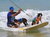 Man's best friend - until they wipe out! Dogs galore for the vetshopaustralia.com.au Dog Surf Workshop.