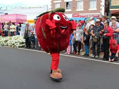 Johno the Apple marches down the street in the grand parade as part of the Apple and Grape Harvest Festival at the weekend. Photo Erin Smith / Stanthorpe Border Post