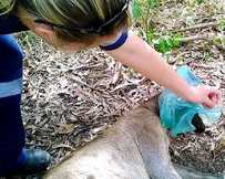 RUBBISH TOLL: The rescue of a kangaroo with a plastic bag caught around its neck was captured on camera.
