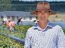 SOME of the region's strawberry farmers are in dire straits because of water restrictions.