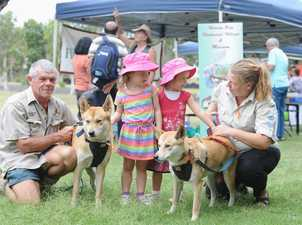 Harmony Day at Hervey Bay Regional Gallery - Condy Park Kindy twins Crystal and Juliette Smith,4, get up close to Ray Revill and Alicia Whatman with dingoes Girri and Kora.