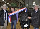JUDGES were full of praise for beef cattle exhibitors who managed to present top quality stock despite the drought.