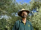 WATERCRESS Creek Olives has overcome a year of extreme weather to serve up another spectacular Olive Festival.