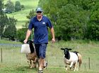 SCOTT Antcliff and Amanda Wollam breed exotic dorper sheep at Tuckeroo Stud in the Limpinwood Valley and believe in a holistic approach to farm management.