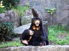 "THE idyllic life rescued Sun Bear ""Mr Hobbs"" shares with his partner Mary at Sydney's Taronga Zoo is a far cry from the cub days spent in a cage."