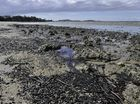 BARNEY Point has earned the title of the state's dirtiest beach thanks to the amount of plastic bags, bottles, smoke butts and rubbish washed up on it shores.