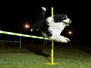 Agility training all the rage at Tivoli