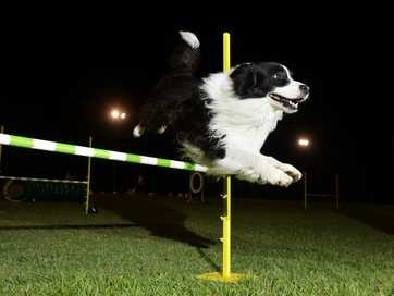 A growing number of dog owners are signing up their pets for dog agility training.